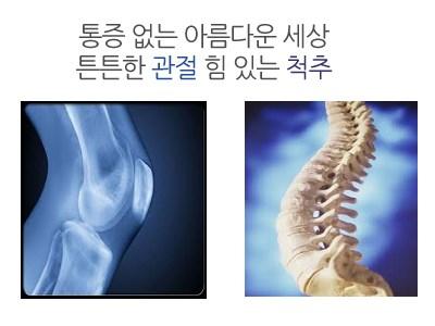 통증 없는 아름다운 세상           튼튼한 관절 힘 있는 척추